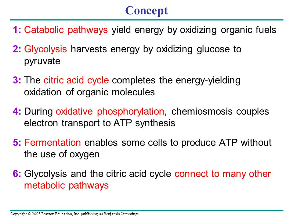 Concept 1: Catabolic pathways yield energy by oxidizing organic fuels