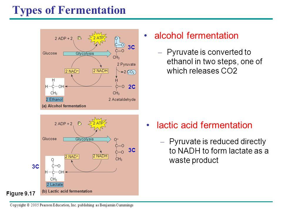 (a) Alcohol fermentation (b) Lactic acid fermentation