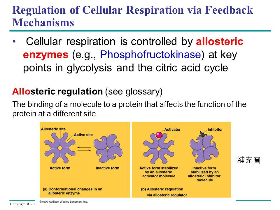 Regulation of Cellular Respiration via Feedback Mechanisms
