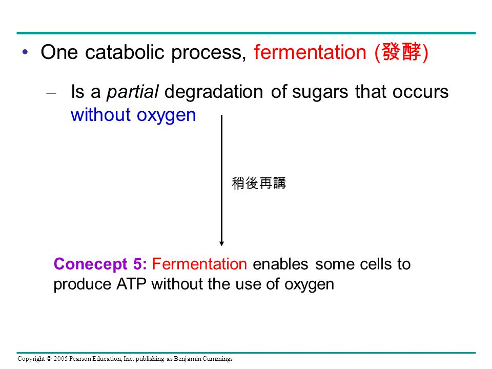 One catabolic process, fermentation (發酵)