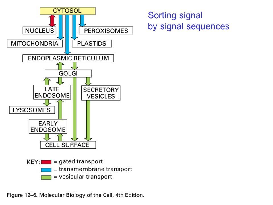 Sorting signal by signal sequences