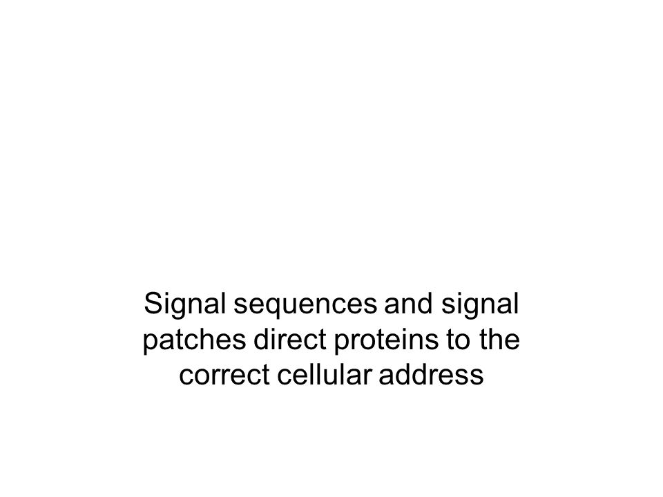 Signal sequences and signal patches direct proteins to the correct cellular address
