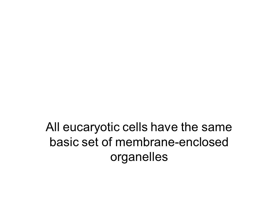 All eucaryotic cells have the same basic set of membrane-enclosed organelles