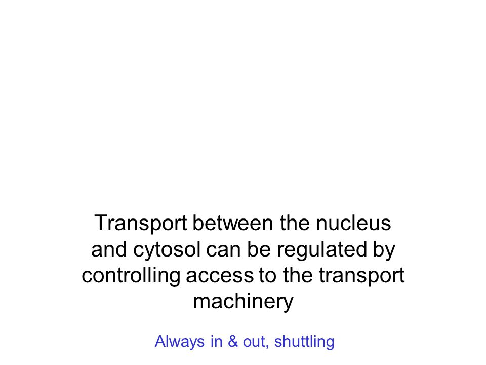Transport between the nucleus and cytosol can be regulated by controlling access to the transport machinery