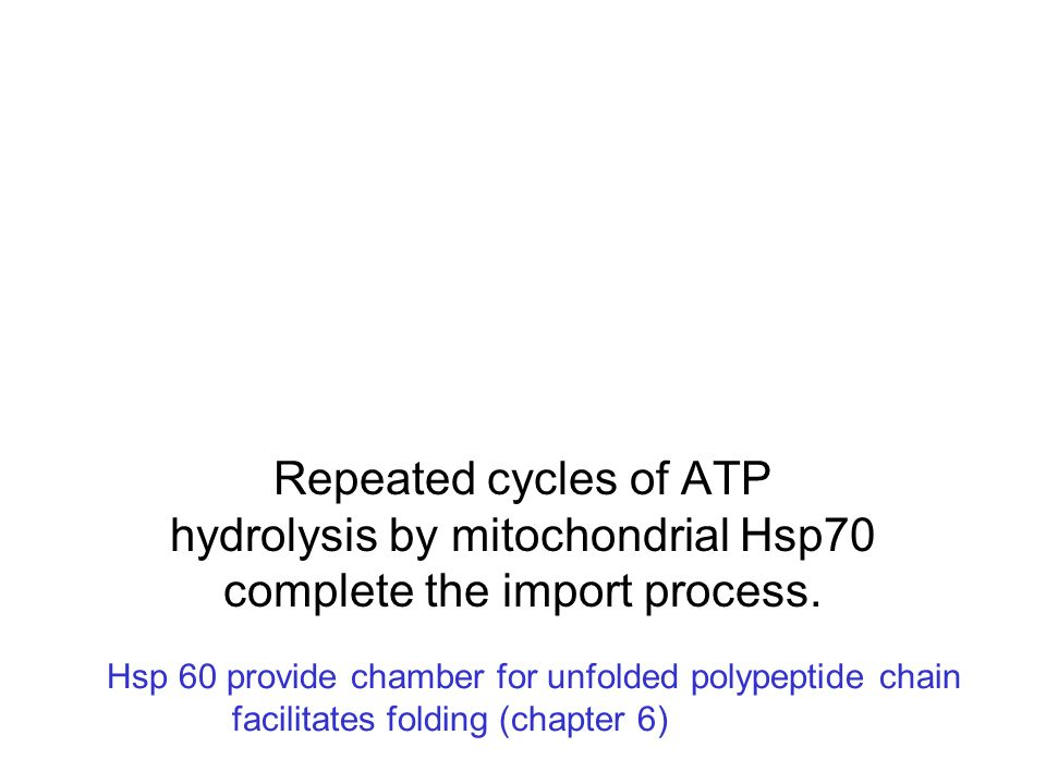 Repeated cycles of ATP hydrolysis by mitochondrial Hsp70 complete the import process.