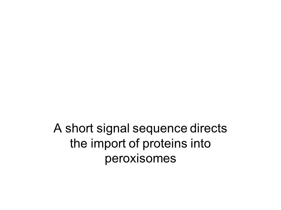 A short signal sequence directs the import of proteins into peroxisomes