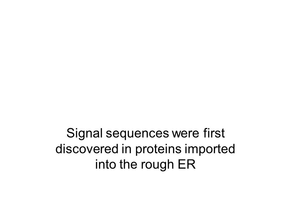 Signal sequences were first discovered in proteins imported into the rough ER