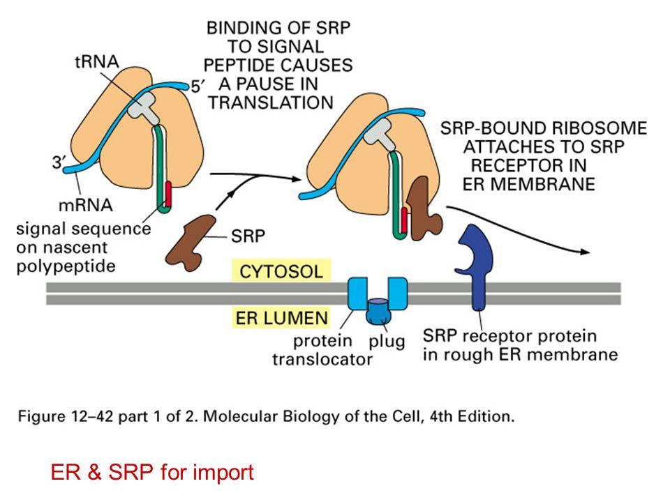 ER & SRP for import