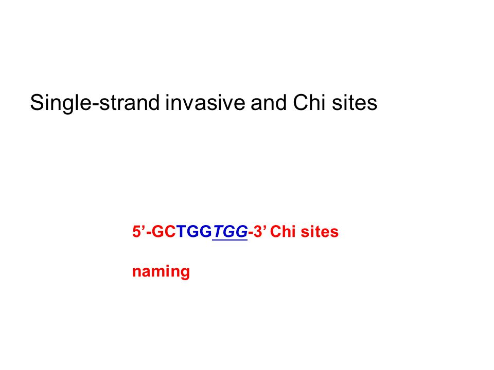 Single-strand invasive and Chi sites