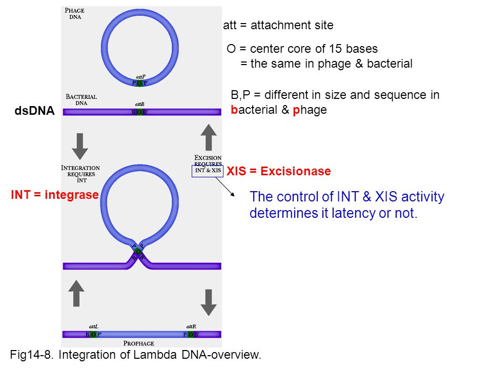 The control of INT & XIS activity determines it latency or not.