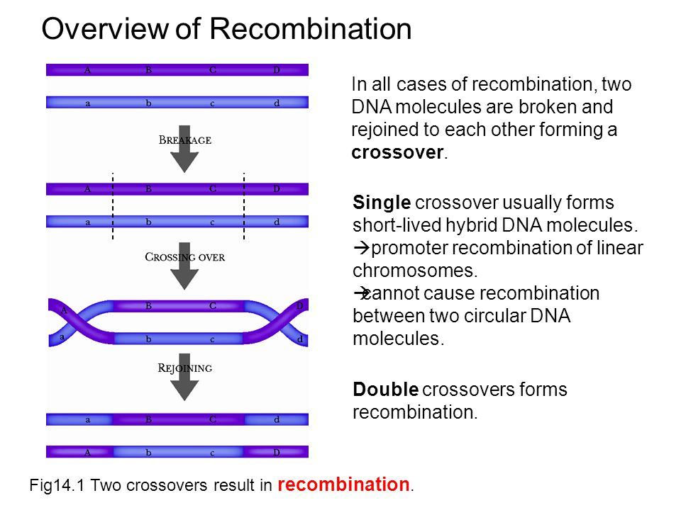 Overview of Recombination