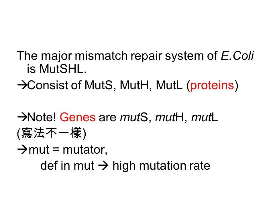 The major mismatch repair system of E.Coli is MutSHL.
