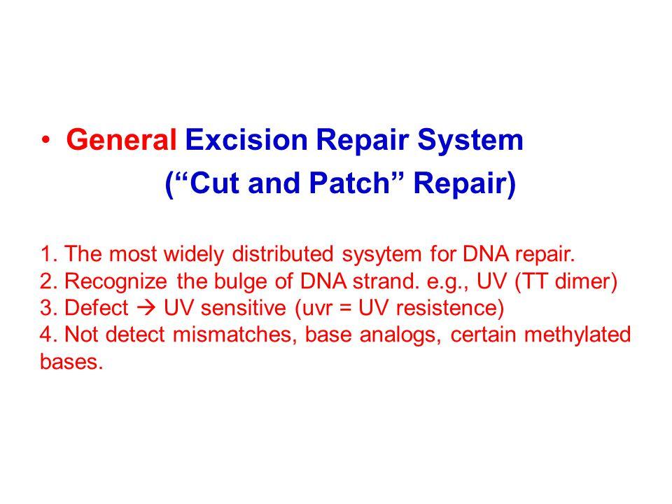 General Excision Repair System ( Cut and Patch Repair)