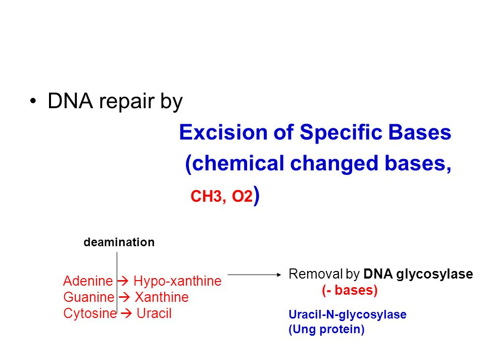 Excision of Specific Bases (chemical changed bases, CH3, O2)