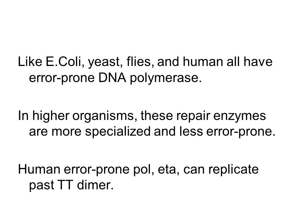 Like E.Coli, yeast, flies, and human all have error-prone DNA polymerase.