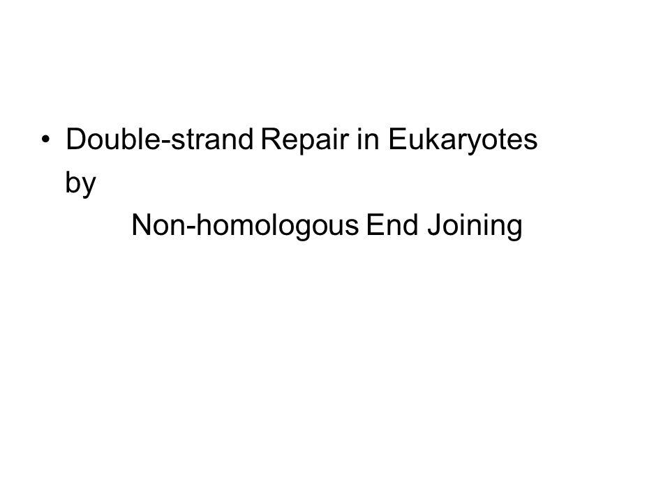 Double-strand Repair in Eukaryotes