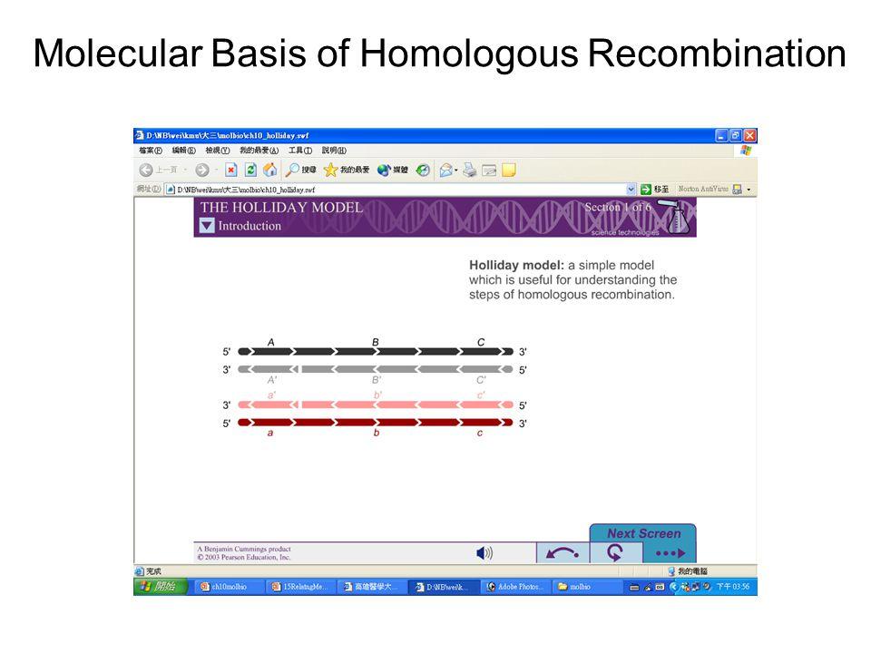 Molecular Basis of Homologous Recombination