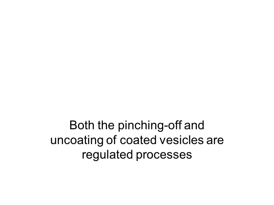 Both the pinching-off and uncoating of coated vesicles are regulated processes