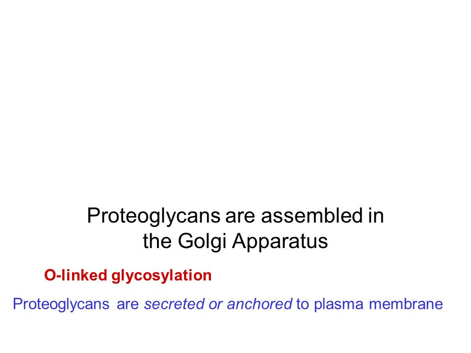 Proteoglycans are assembled in the Golgi Apparatus
