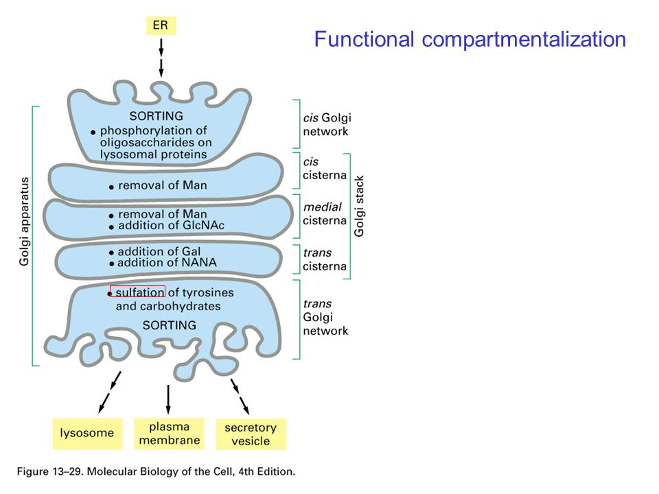 Functional compartmentalization