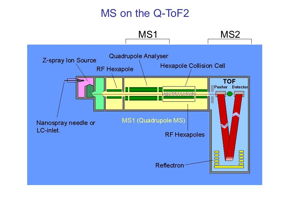 MS on the Q-ToF2MS1. MS2.