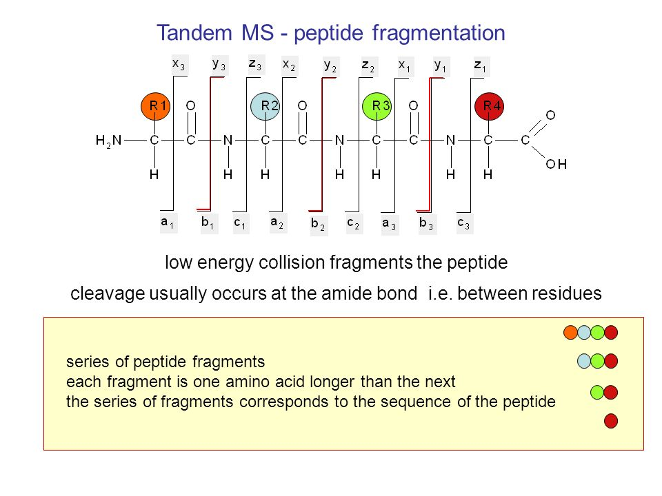 Tandem MS - peptide fragmentation