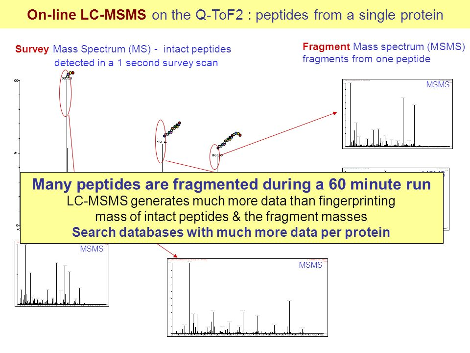 Many peptides are fragmented during a 60 minute run
