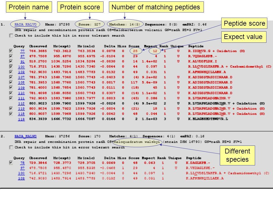 Number of matching peptides Protein score Protein name