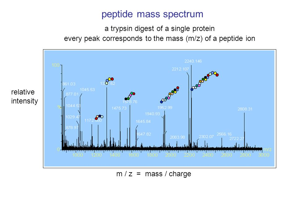 peptide mass spectrum a trypsin digest of a single protein