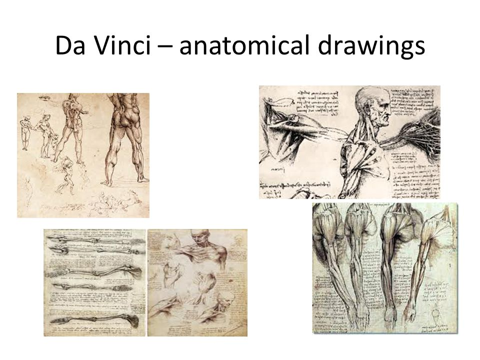 Da Vinci – anatomical drawings