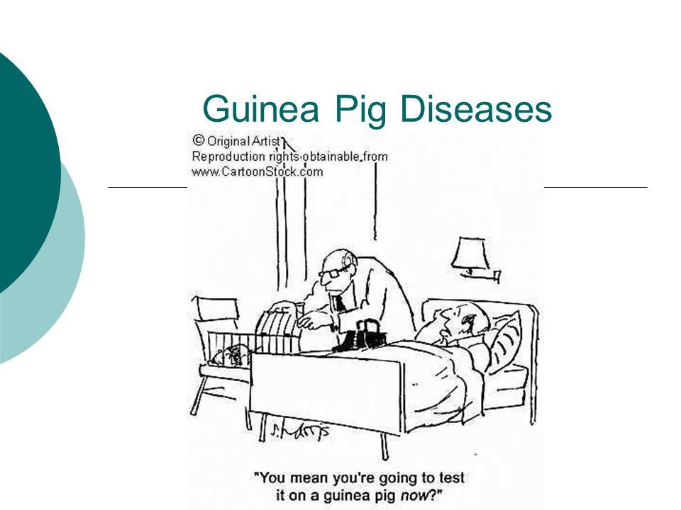 Guinea Pig Diseases. - ppt video online download