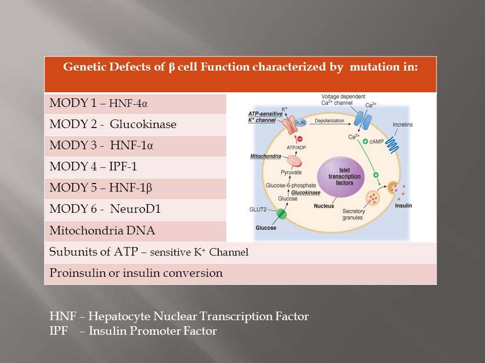 Genetic Defects of β cell Function characterized by mutation in: