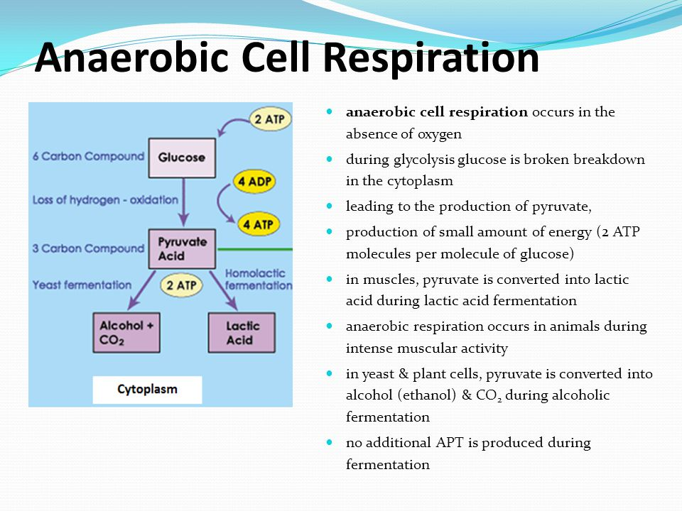 Anaerobic Cell Respiration