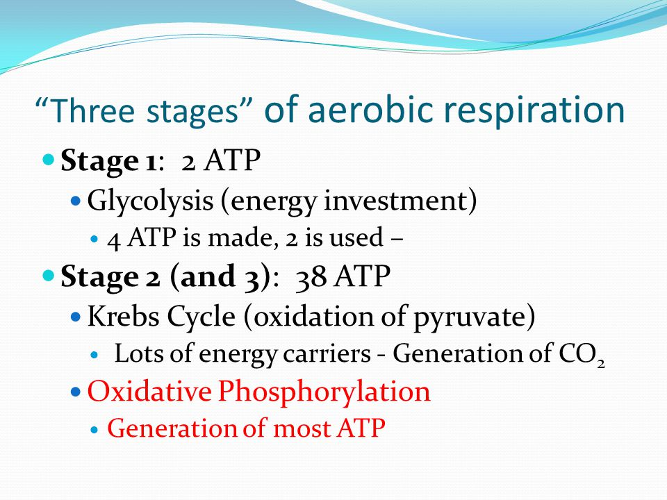 Three stages of aerobic respiration