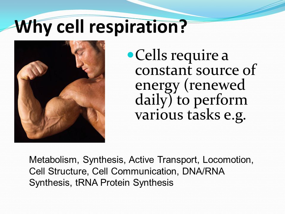 Why cell respiration Cells require a constant source of energy (renewed daily) to perform various tasks e.g.