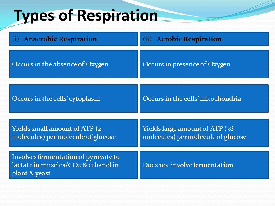 Types of Respiration (i) Anaerobic Respiration