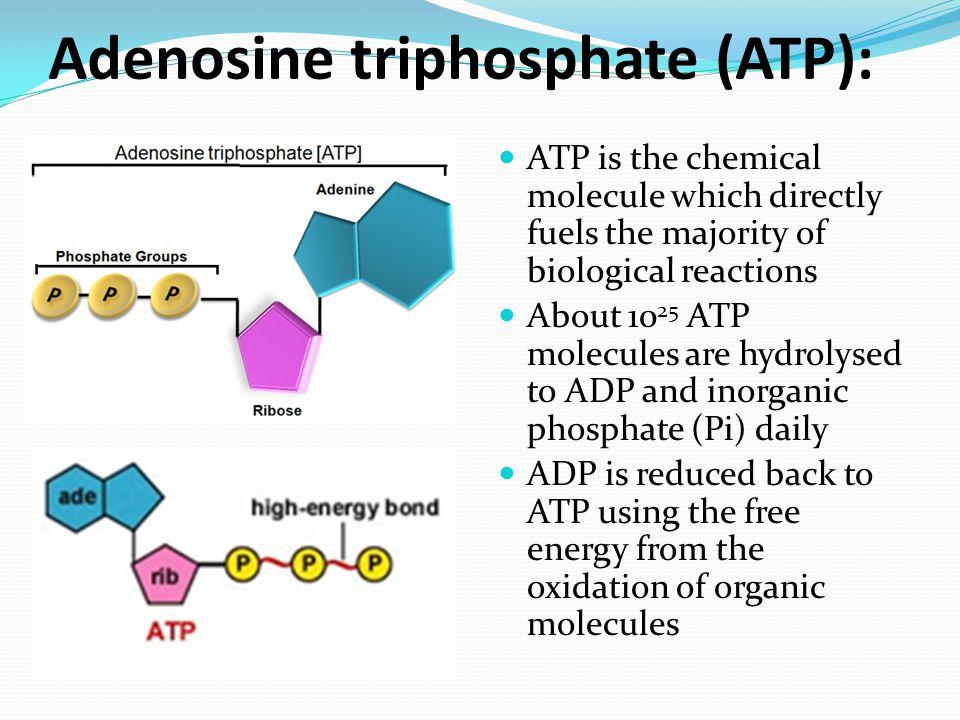 Adenosine triphosphate (ATP):