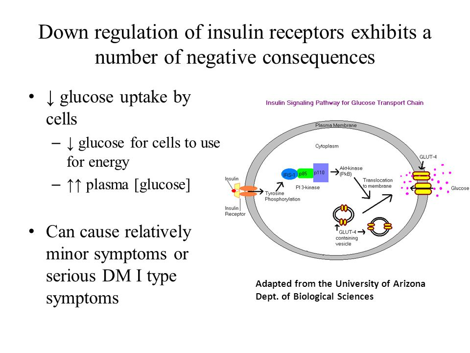 Down regulation of insulin receptors exhibits a number of negative consequences