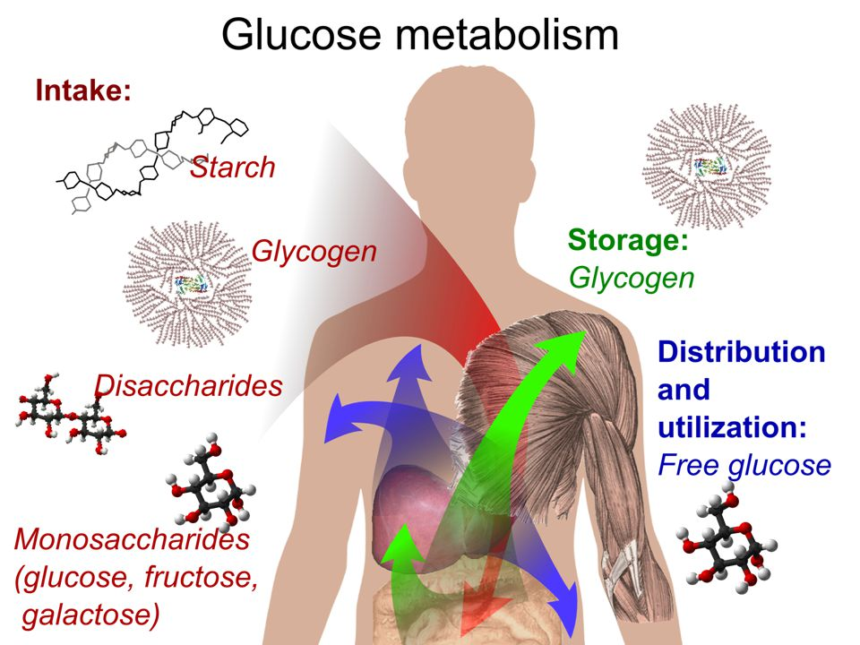 -Glucose is your body's main source of energy