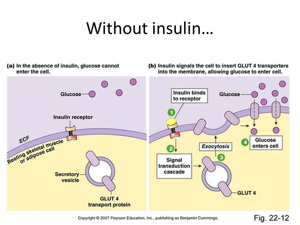 Without insulin… -Insulin is a peptide hormone released by the pancreas (next slide).
