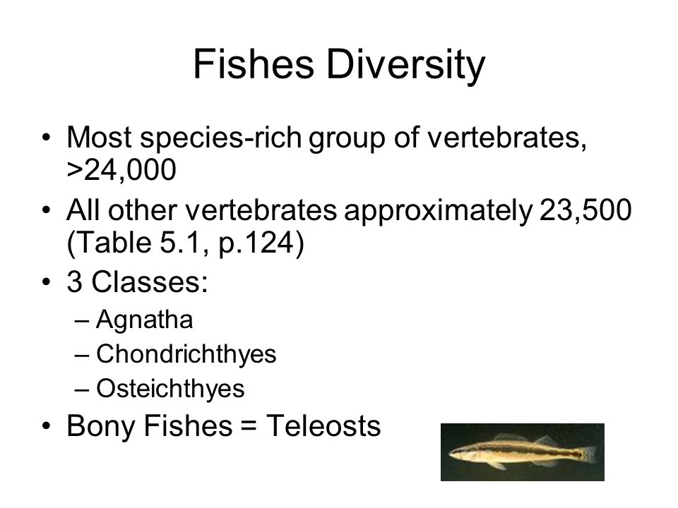 Fishes Diversity Most species-rich group of vertebrates, >24,000