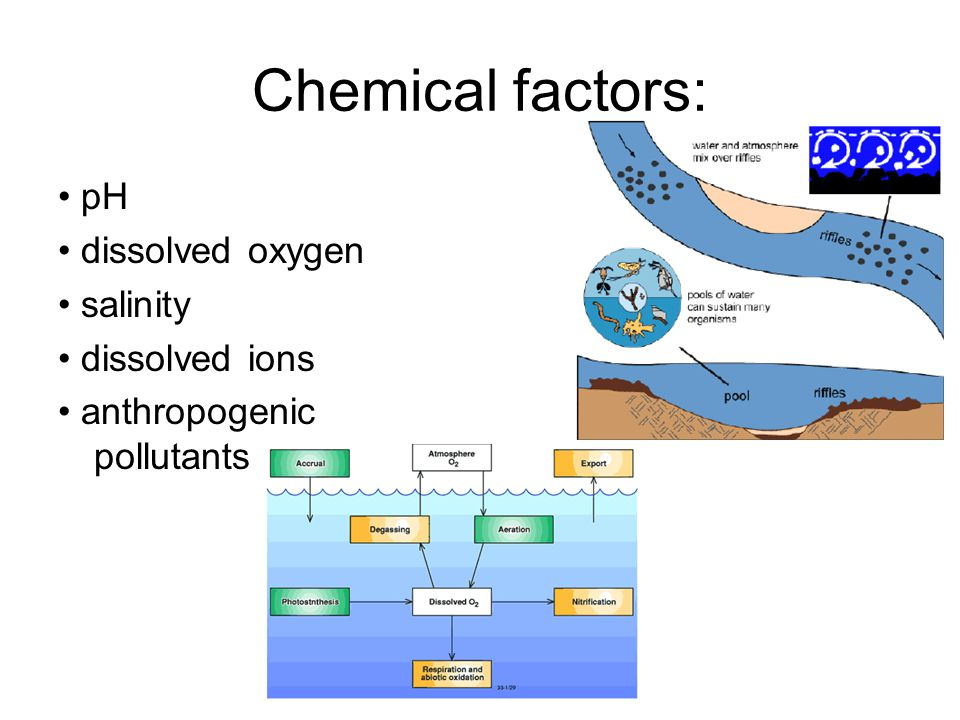 Chemical factors: • pH • dissolved oxygen • salinity • dissolved ions