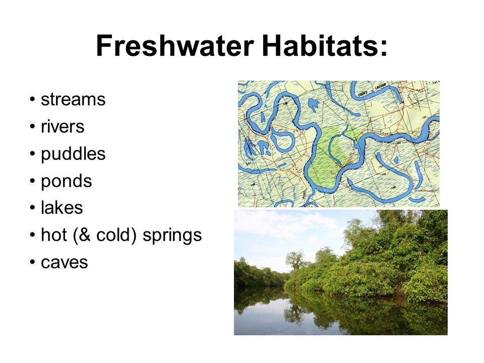 Freshwater Habitats: • streams • rivers • puddles • ponds • lakes