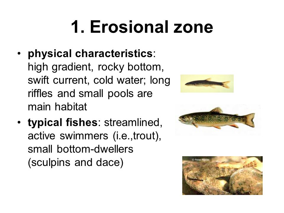 1. Erosional zone physical characteristics: high gradient, rocky bottom, swift current, cold water; long riffles and small pools are main habitat.