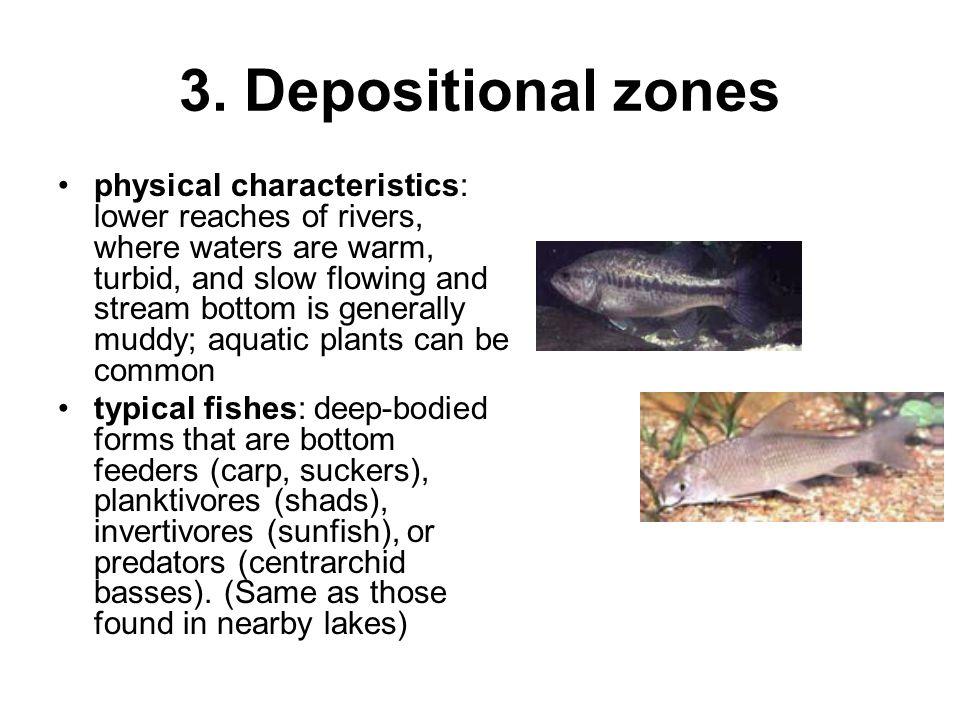 3. Depositional zones