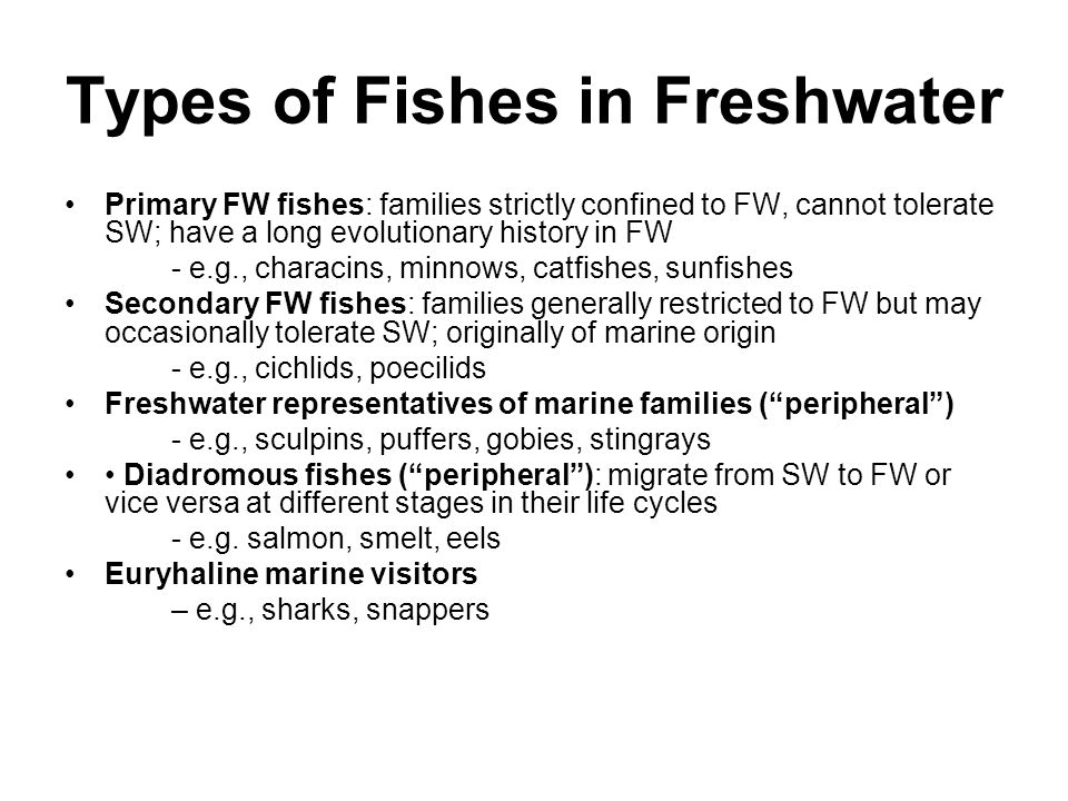 Freshwater fishes aquatic ecology ppt download for Freshwater fish representative species