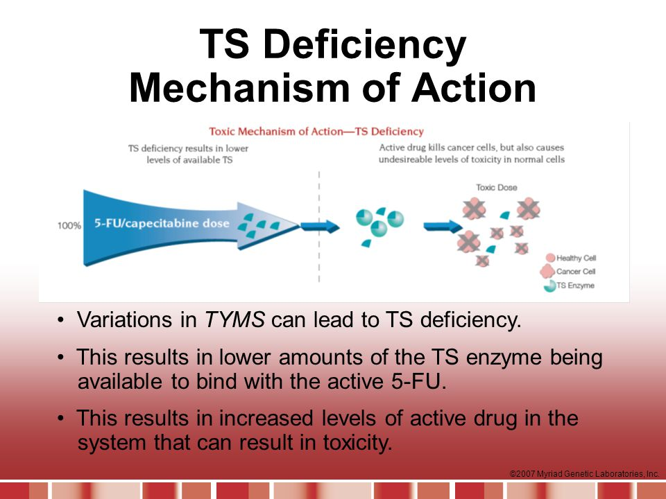 TS Deficiency Mechanism of Action