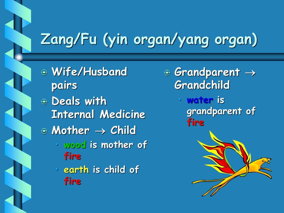 Zang/Fu (yin organ/yang organ)