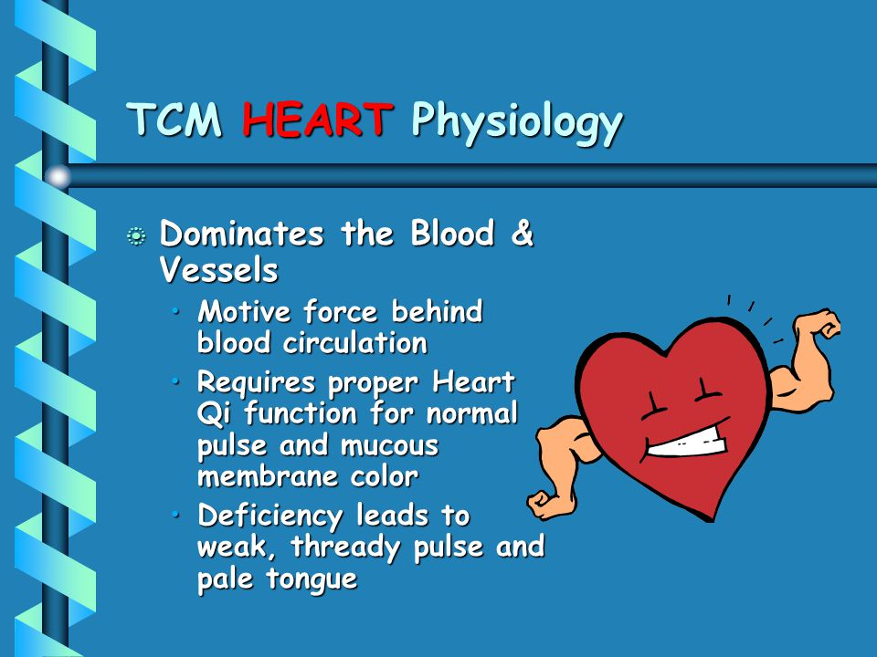 TCM HEART Physiology Dominates the Blood & Vessels