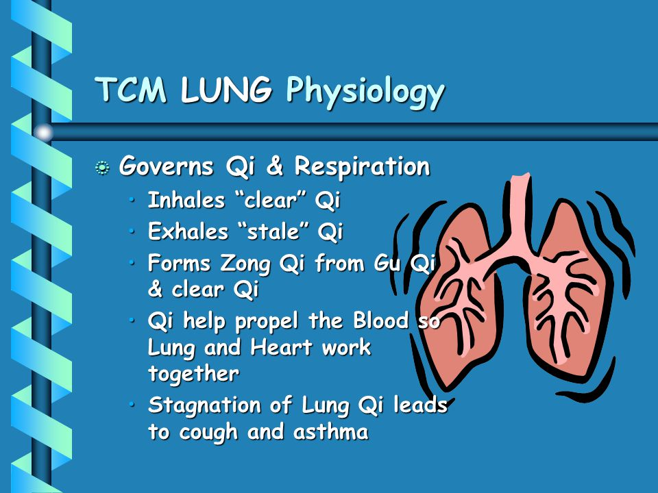 TCM LUNG Physiology Governs Qi & Respiration Inhales clear Qi
